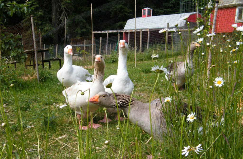 Garden Fairy Farm